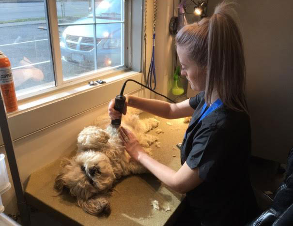 dog-trimming